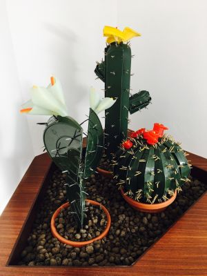 Corrado Bonomi Culture site specific piante grasse concettuale ironico