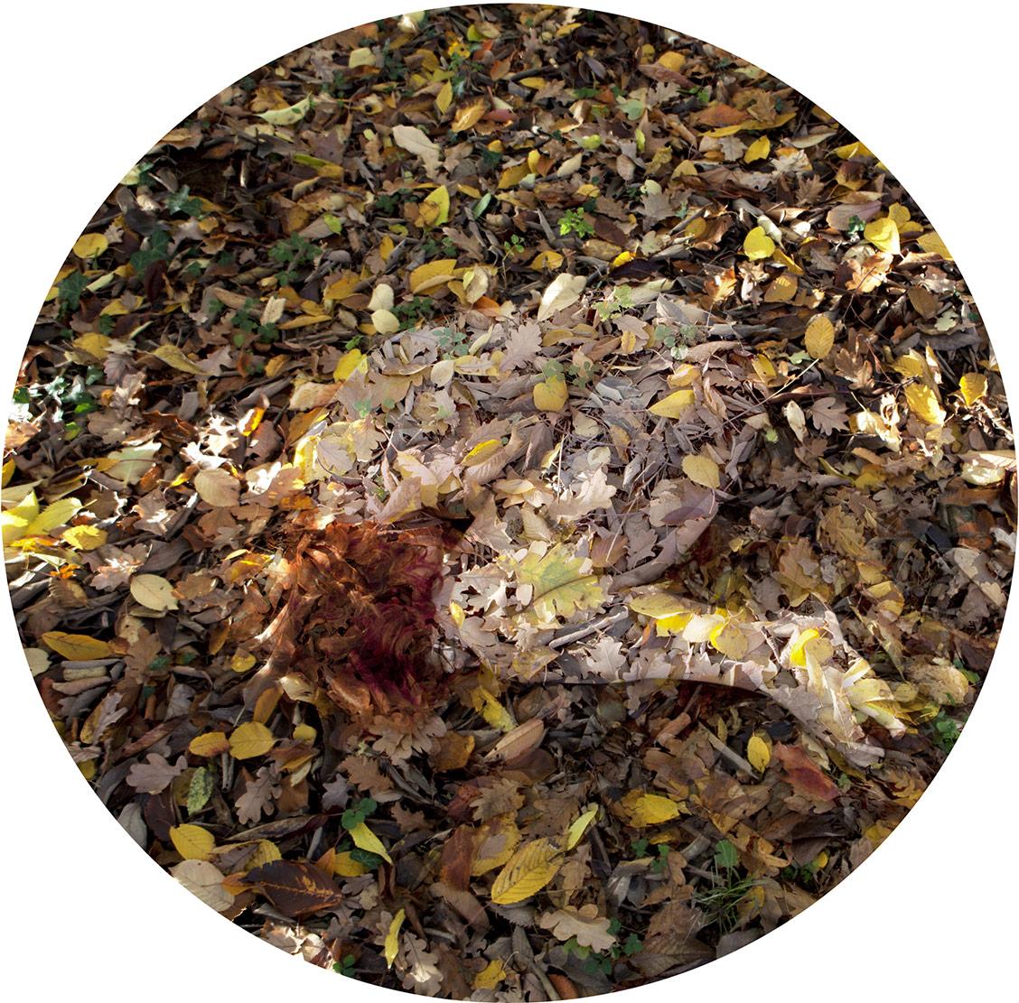 Opera di Francesca Della Toffola con foglie